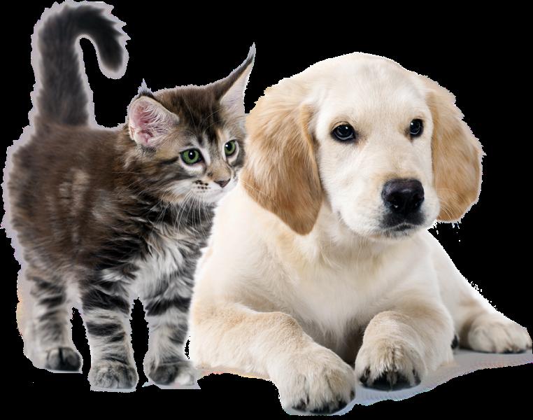 Caja mixta (perro y gato)